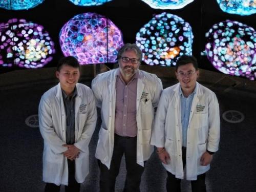 澳大利亚牵头的国际研究团队从皮肤细胞中生成首个人类早期胚胎模型
